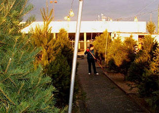 WEB Annual Christmas Tree Sale